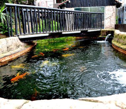 Khoi-Pond-Bridge1-1