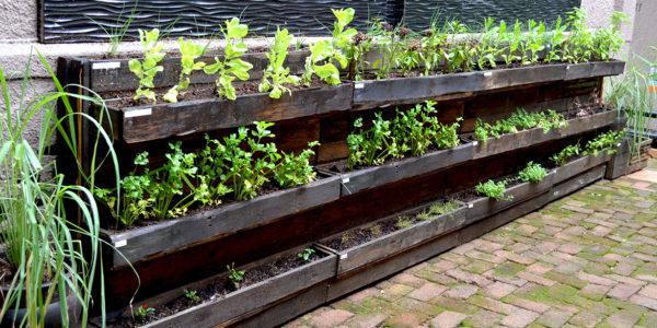 Herb-Garden-new